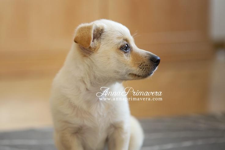 #perro #perros #mascotas #fotografía de mascotas www.annaprimavera.com Fotógrafo Madrid