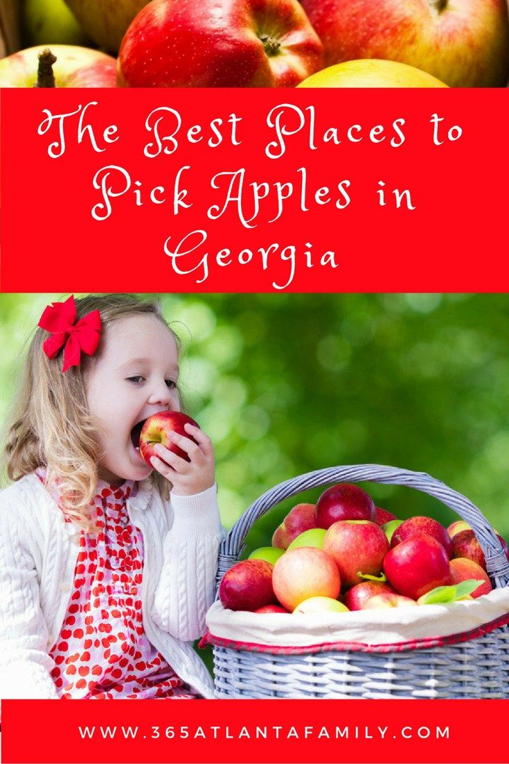 The headgate of fall? Apple picking in Ga - especially in the North Georgia Mountains. Only a short drive from Atlanta, these U-Pick Georgia apple orchards are sure to create memories with your family to last a life time (or at least a season!)