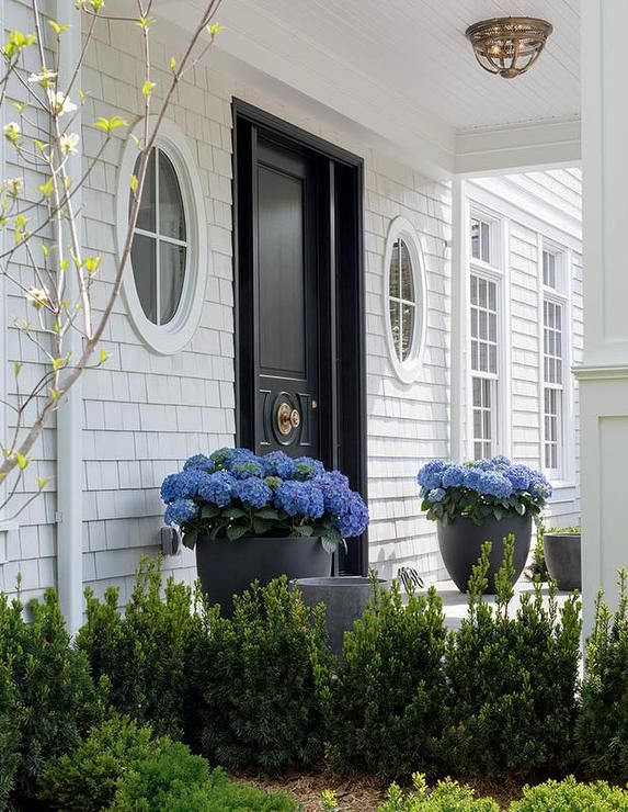 Black Planters Potted With Blue Hydrangeas Flanking A Black Front