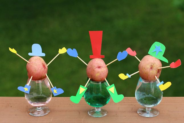 Part science, part cute craft: make potato sprout people!