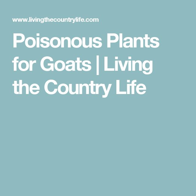 Poisonous Plants for Goats | Living the Country Life
