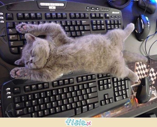 Zabawne kociaki