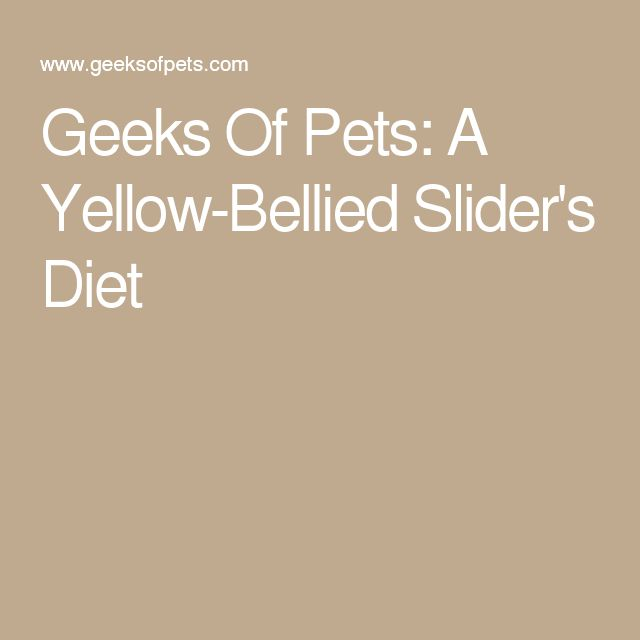 Geeks Of Pets: A Yellow-Bellied Slider's Diet