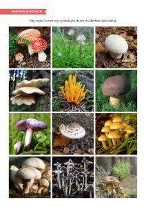 Pierwszy Dzień Jesieni – grzybowe memory (wydrukuj dwukrotnie, rozetnij i baw się) Pierwszy Dzień Jesieni – jesienna oś czasu http://www.ekokalendarz.pl/pierwszy-dzien-jesieni-jesienny-pakiet-edukacyjny/