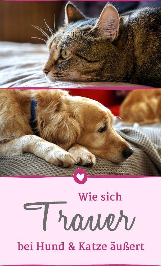 Wie Haustiere Trauern Leiden Hunde Und Katzen Gleich Stark Hund Und Katze Katzen Hunde
