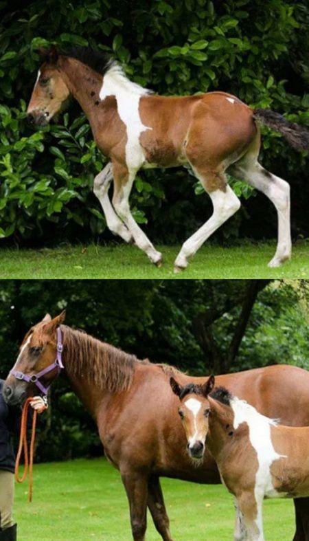 Baby Horse Da Vinci Born With Horse-Shaped Marking (VIDEO) #horses #animals