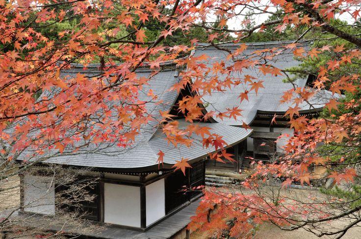 京都  神護寺。金堂の石段から五大堂(手前)と毘沙門堂を望む。神護寺定番中の定番。