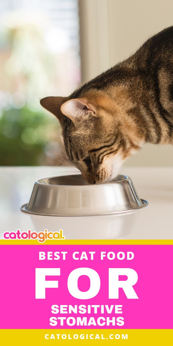 Best Cat Food For Sensitive Stomachs Best Cat Food Sensitive Stomach Cat Food Cat Food