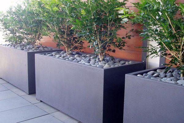 The classic Murraya hedge in a modern planter   The Urban Balcony