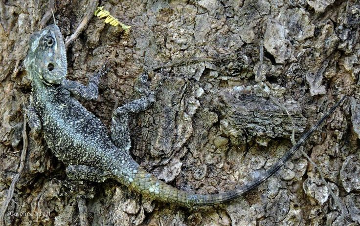 Camouflage in Nature.  Blog and Photography by Caroline Street.
