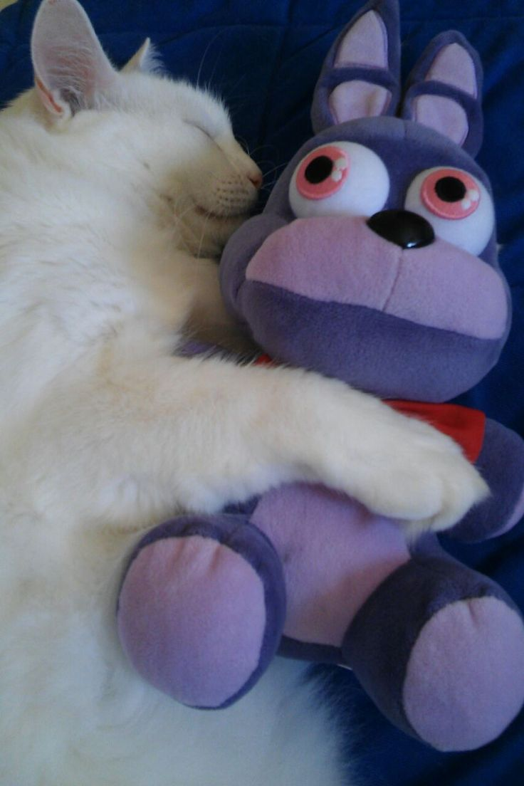 How to make your own five nights at freddys foxy plush - I Have A Mangle Or Funtime Foxy Plush