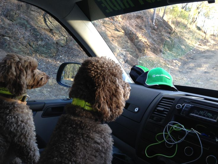 Our little helpers - on traffic watch while out on deliveries