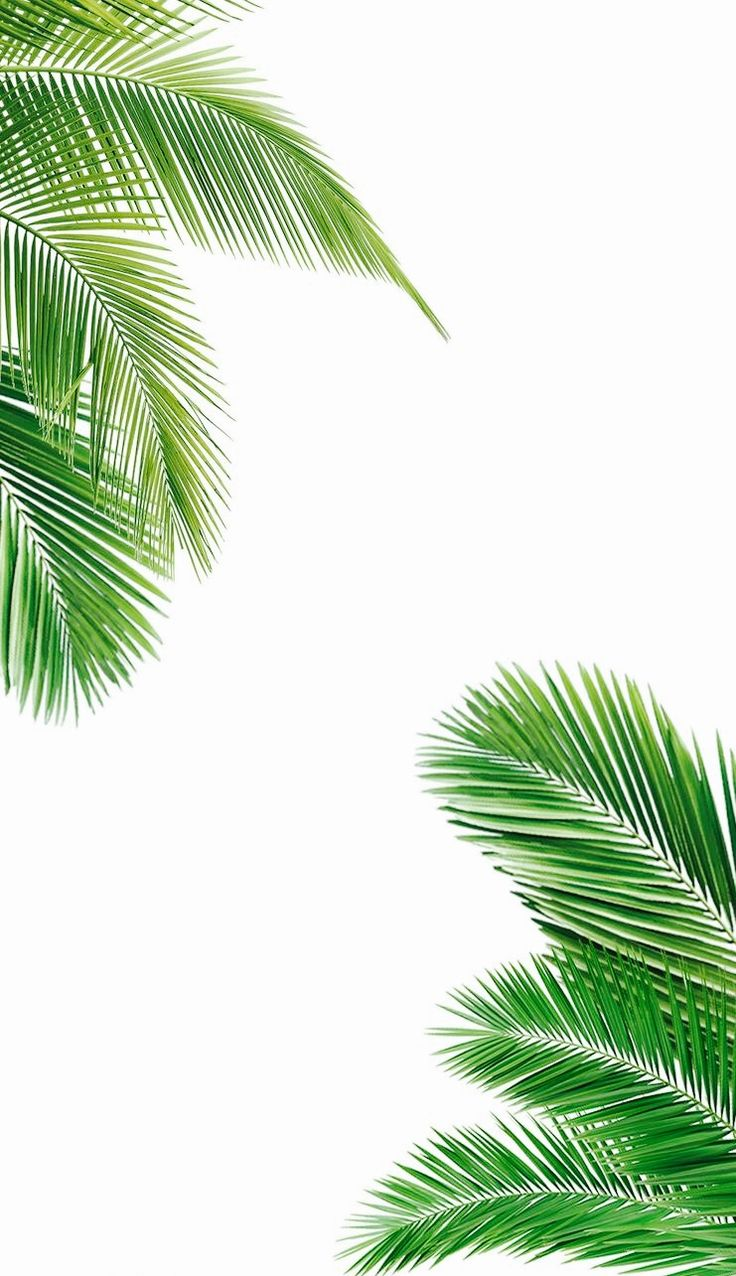 palm fronds tumblr - photo #18
