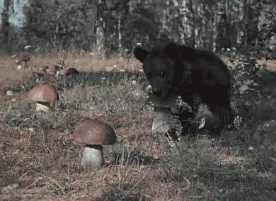 The little bear stealing the mushroom of YOUR ENTIRE BEING. | 31 Things To Warm Your Heart On This Cold Day