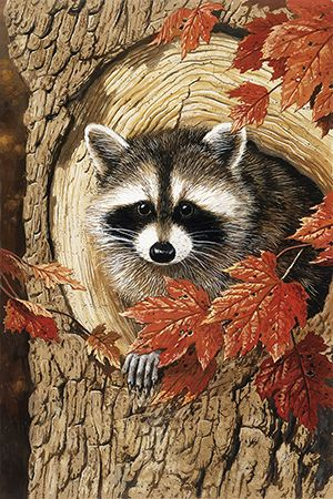 """""""Raccoon"""" by William Vanderdasson"""