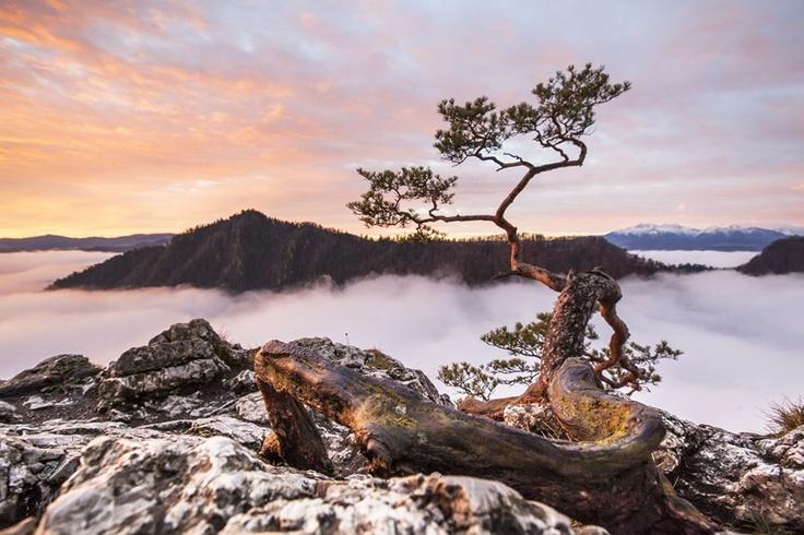 #Poland, Pieniny Mountains, Sokolica  Photographer: Grzegorz Błachuta