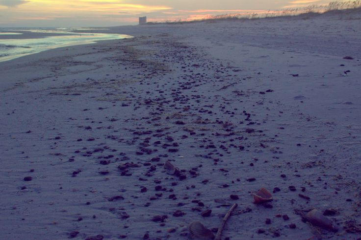 PHOTOS: Oil washing up on the Gulf Coast after Hurricane Isaac | Greenpeace Blogs