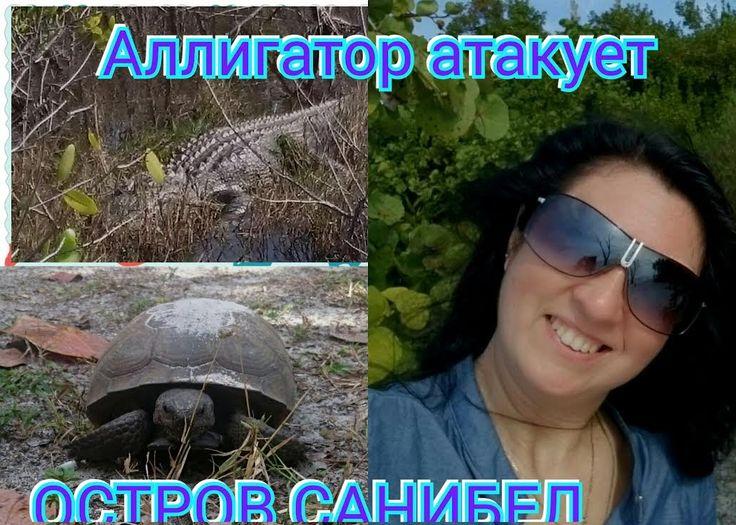 Америка: Аллигатор атакует. Черепаха шипит. Ракушки за 2 $. Остров Санибел.