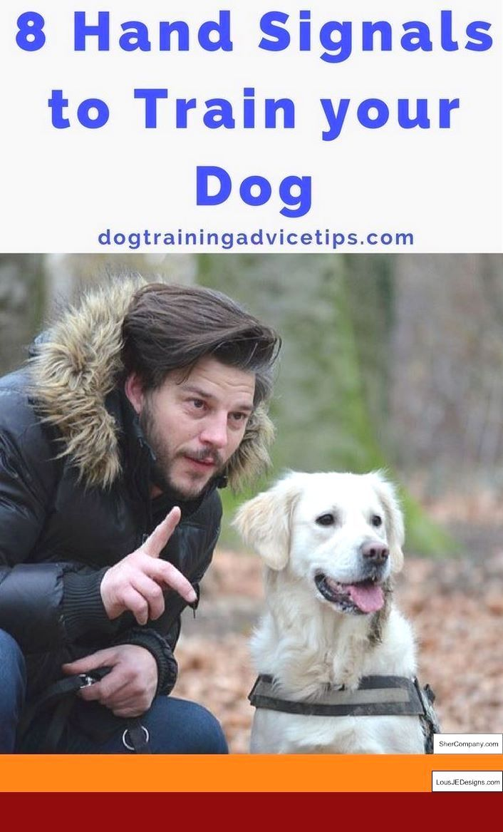 Dog Training Tips Counter Surfing And Pics Of How To Train Your