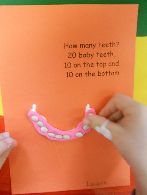 Feb. is Dental Health Month. How many teeth?