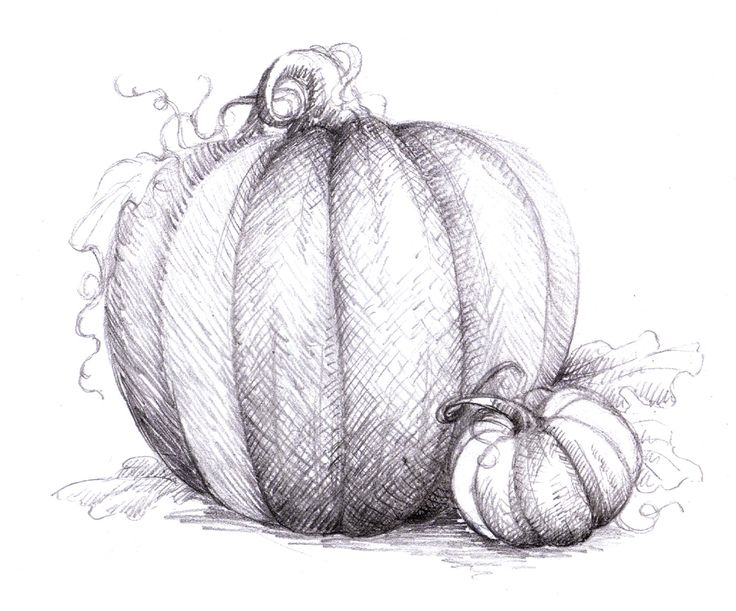 Magellin . Blog: Pumpkin drawing - cross hatching