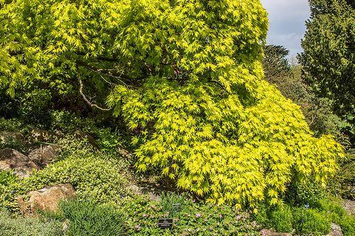 Botanic Gardens - Dublin [The Streets Of Ireland]