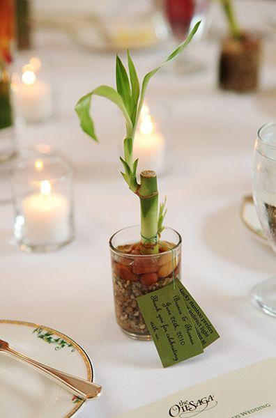 cute green bamboo plant as a party favor on a wedding table | www.AnnasWeddings.com - Boston Wedding Photographer