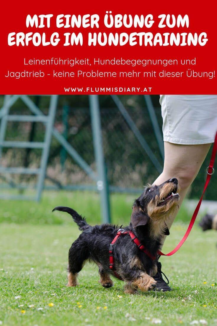 Erfolg Im Hundetraining Mit Einer Ubung Jana Zorn Mit Bildern Hundchen Training