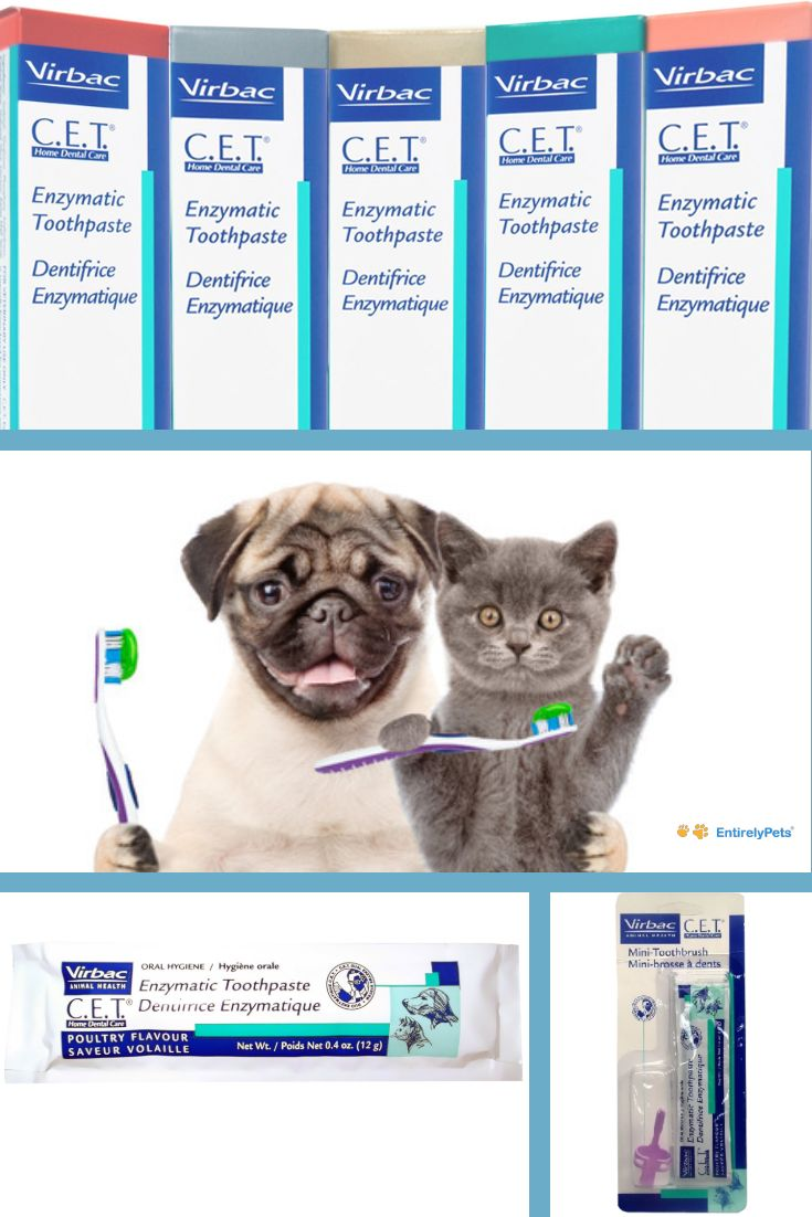 Virbac Cet Toothbrushes Toothpastes Provide The Best Dental Care For You And Your Pet Because Healthy Teeth Big Dog Care Happy Animals Online Pet Supplies