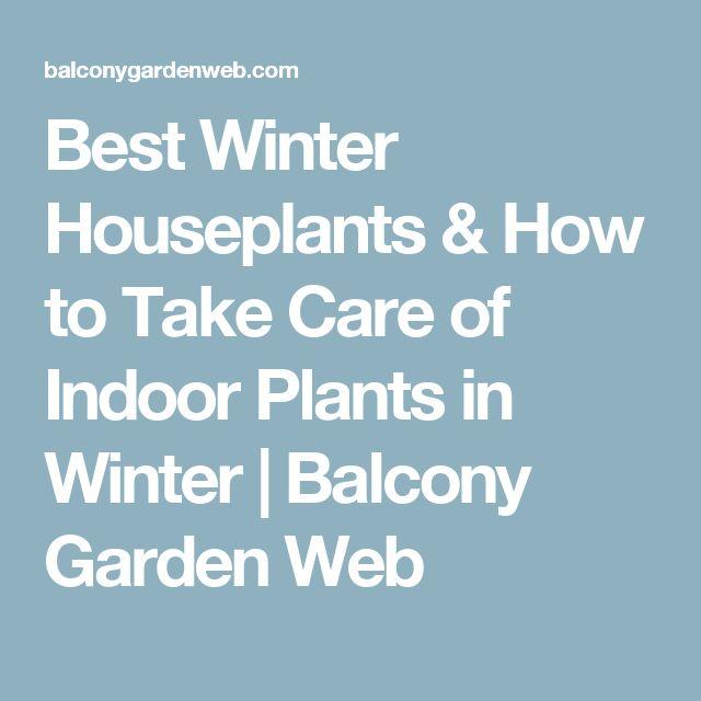 Best Winter Houseplants & How to Take Care of Indoor Plants in Winter   Balcony Garden Web