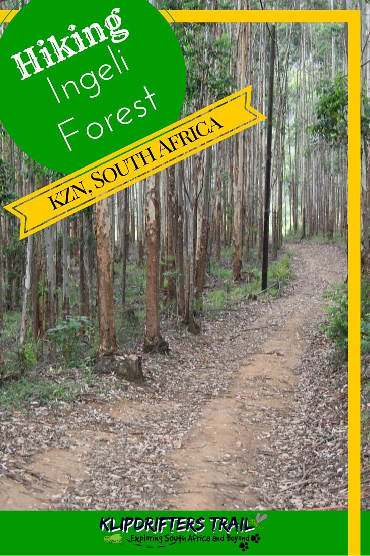 Ingeli Forest Hike and Mountan biking #kwazulunatal #southafrica #hiking