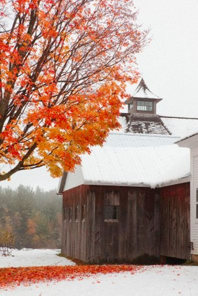 Autumn, Cleveland style (although this was undoubtedly taken somewhere else): Winter Snow, Fall Leaves, Autumn Leaves, Favorite Seasons, Autumn Seasons, Autumn Snow, Autumn Barns, Fall Snow, Country Barns