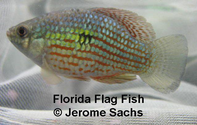 296 best aquarium images on pinterest fish aquariums for South florida freshwater fish