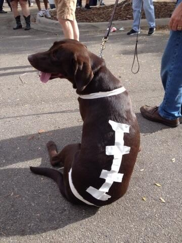 One fan dressed up his or her chocolate lab with a football doggy costume for the Florida State Seminoles' home showdown against the Miami Hurricanes.
