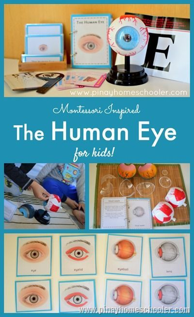 Learning the Parts of the Human Eye