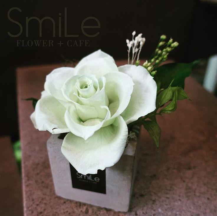 여의도 스마일플라워앤카페 프리저브드플라워 한송이 kakao id. http://goto.kakao.com/jemdk4pi 블로그. http://blog.naver.com/smile_flower_cafe 인스타. https://instagram.com/smile_flower_cafe 스마일은 앞으로도 노력해서 좋은 모습 보여드리겠습니다~ 감사합니다. 'for your smile' SMILE FLOWER #여의도 #여의도플라워샵 #여의도꽃집 #여의도화원 #플라워샵 #스마일플라워앤카페 #여의도커피숍 #플라워카페 #맛집 #smile #flowercafe #프리저브드플라워 #프리저브드 #preserved #preservedflower #プリジョブドゥ #プリザーブドフラワー #시들지않는생화 #시들지않는꽃 #다발 #화병 #수국 #카네이션 #특별한날 #선물 #1000일 #동서양꽃사범 #플로리스트김혜정 #김혜정 #since2001