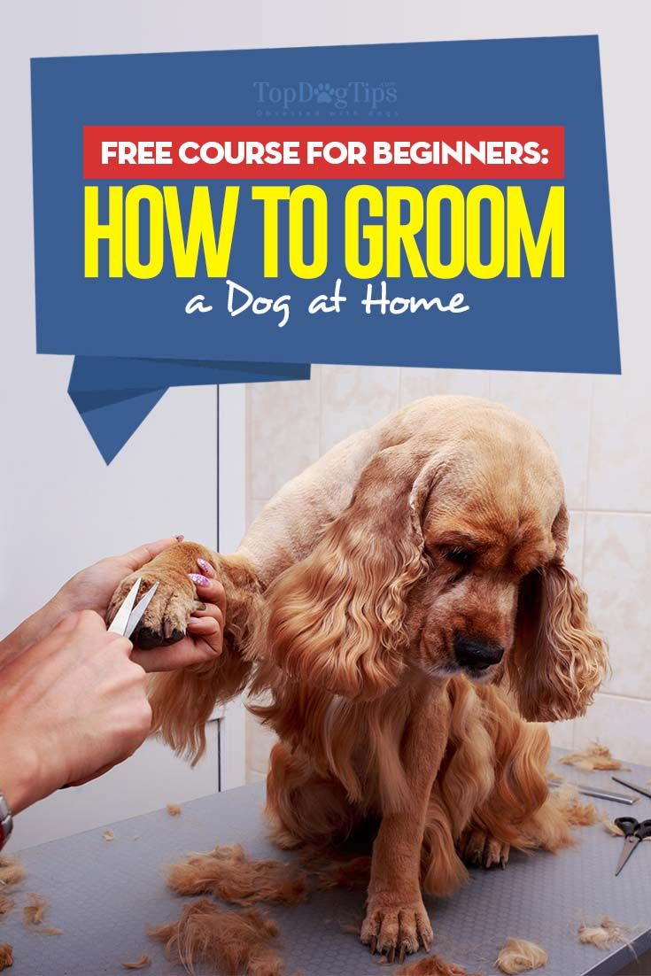 Dog Grooming Huge Free Guide For Beginners Dog Grooming Styles