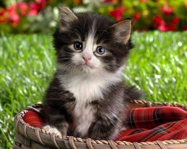 Resultado de imagen para fotos de gatos tiernos y cariñosos