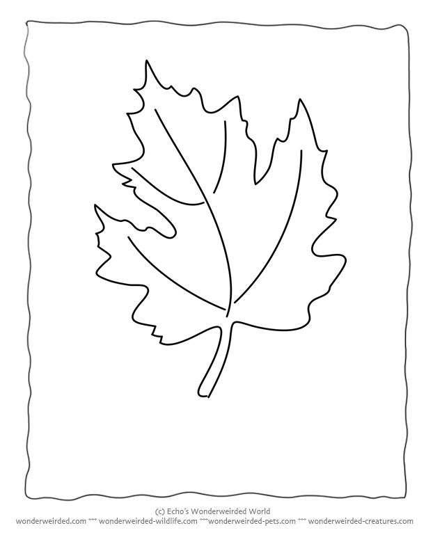 Maple Leaf Coloring Page Collection Wonderweirded Wildlife Free Printable