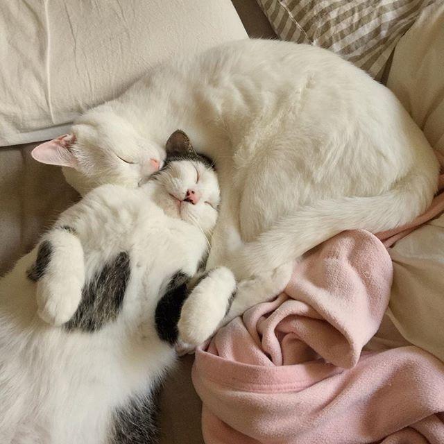 naomiuno 今無性に叫びたい… 『ニャンコが好きやーーー大好きやーーー!!ワンコも好きやーーー!!皆んな幸せになって欲しいんやーーー!!』 #八おこめ #ねこ部 #cat #ねこ 2016/12/14 23:52:59