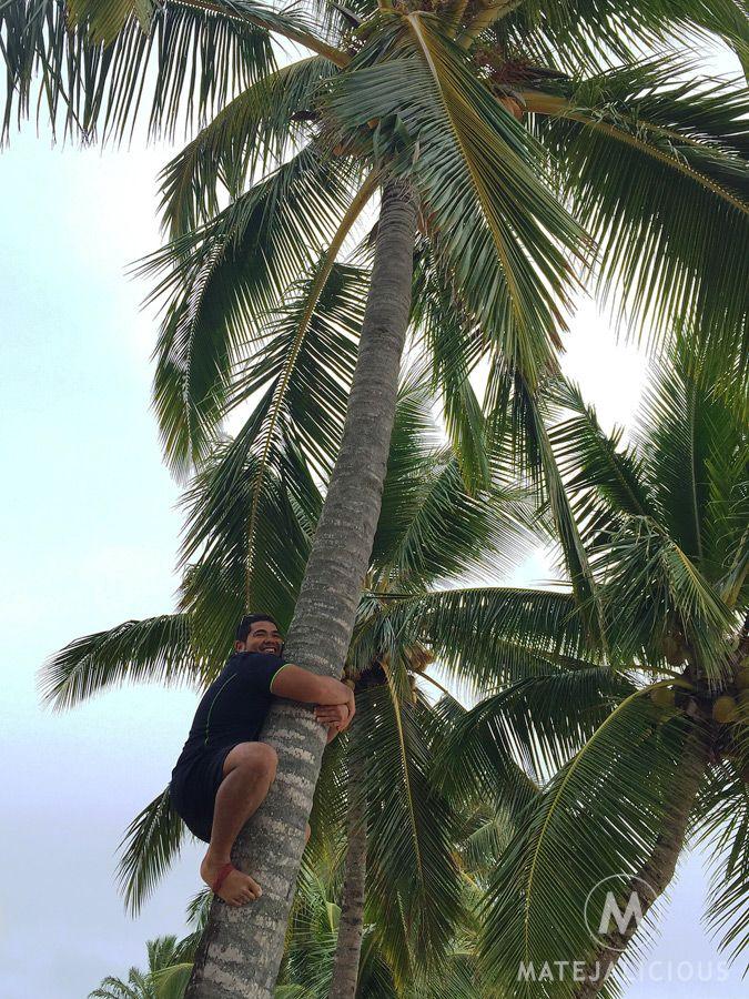 Coconuts Rarotonga - Matejalicious Travel and Adventure