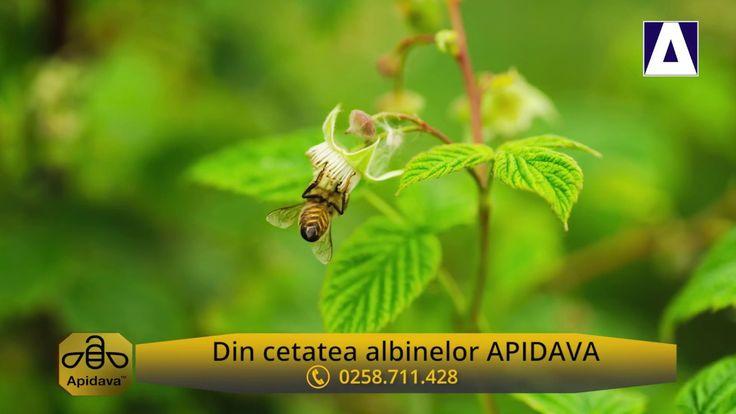 Din Cetatea Albinelor - Mierea de zmeura Roua Florilor de la Apidava