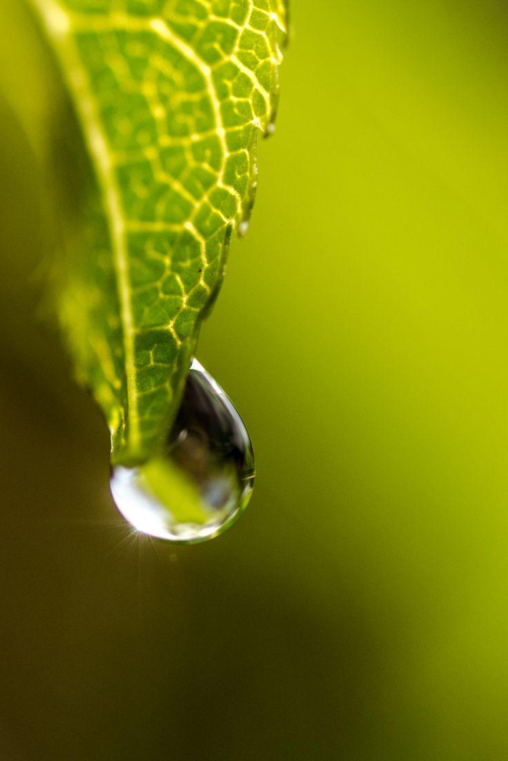 Condoleance- en aandachtskaart met druppel in groen van fotograaf Hans Lunenburg