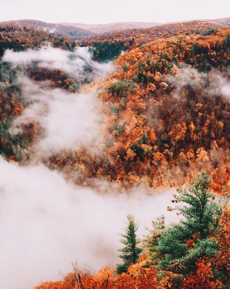 Fall foliage #leaves #Fall | BEAUTIFUL PLACES in 2019 | Fall, Autumn