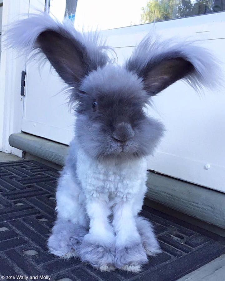 Famous Fluffy-Eared Rabbit Has a New Partner—And She's Just as Adorable