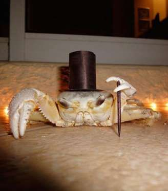 This Crab Dressed as a Fancy Man  For all the pet crab owners: Please dress your little crustacean in a top hat and cane. PLEASE.