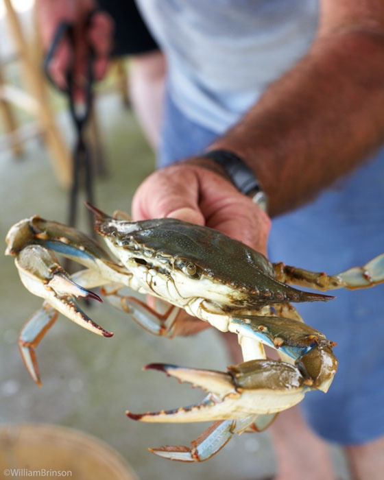 88 best images about clamming crabbing fishing on for Blue crab fishing