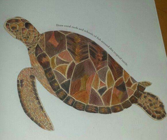 Animal Kingdom Colouring Ideas 13 Best Millie Marotta Tortugas Images