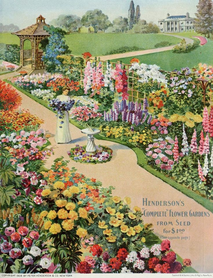 peter henderson u0026 co seed catalogue cover c