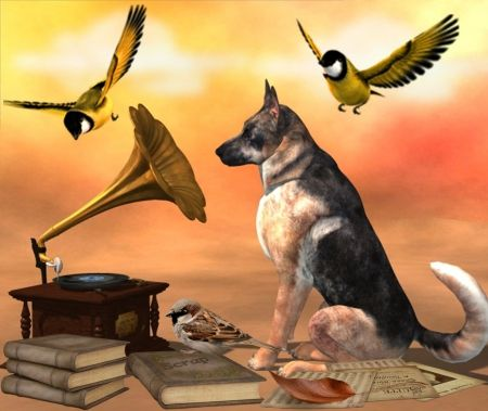 Dog and the Music - music, gramofon, book, dog, bird